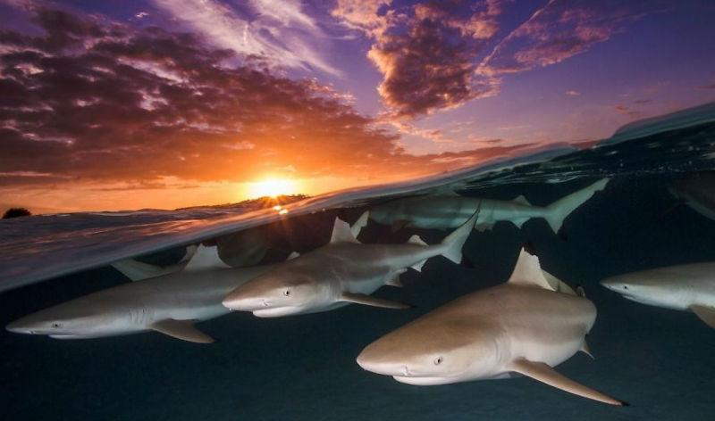Лучшие работы фотоконкурса «Подводный фотограф года», которые откроют вам новый мир