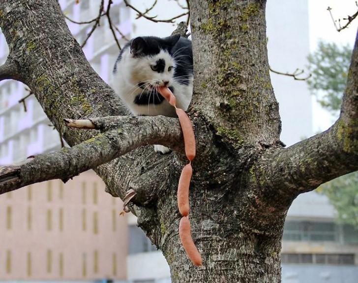 CatThieves14 Котики, которых застали врасплох