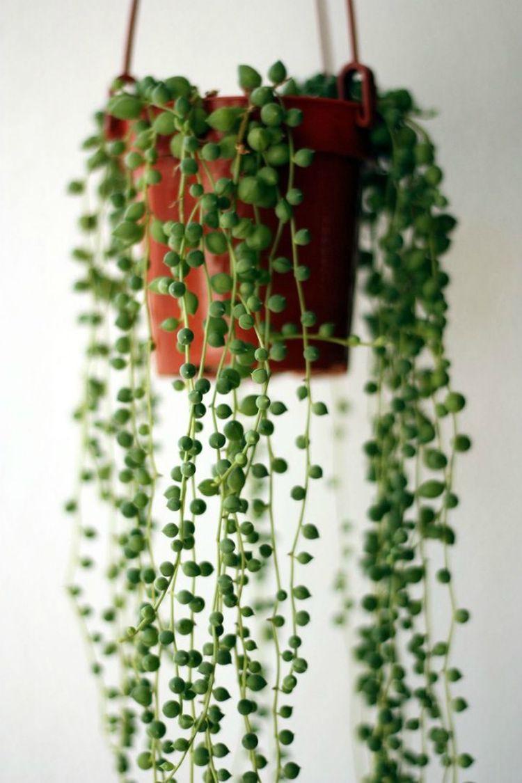 2. Горошек дом, растения