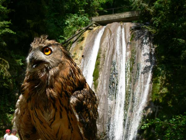 """20 фотографий парка """"33 водопада"""", Сочи"""