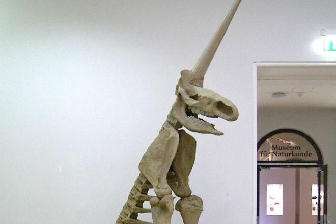 Скелет единорога из музея оказался подделкой ученых