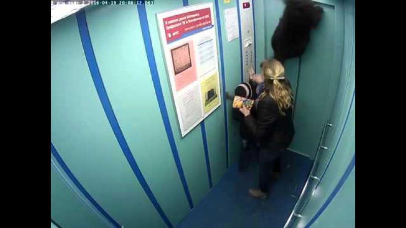 В Петербурге лифт чуть не задушил собаку