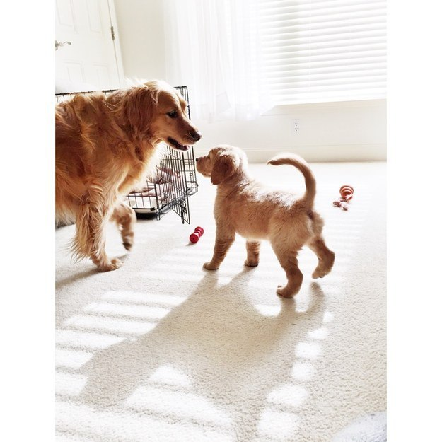 7. «Мам, смотри, какой я большой!» животные, позитив