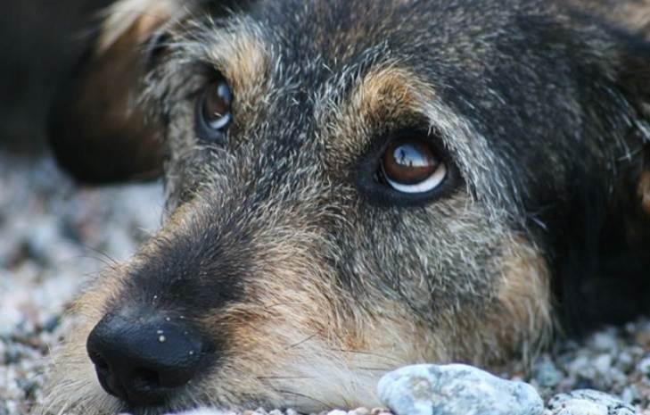 Он часто задирал добродушного пса, но однажды получил по заслугам…