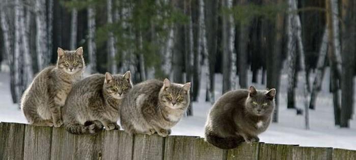 10 интересных фактов о кошках интересно, коты, факты