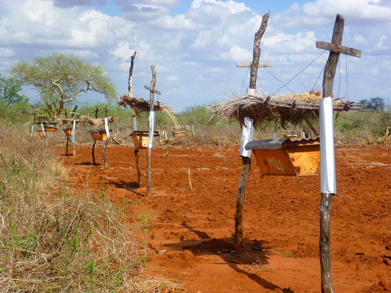 Ты никогда не догадаешься, зачем эти фермеры ставят ульи на своей земле... Отличная идея!