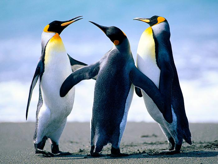В Татарстане спасли тонущих «пингвинов»