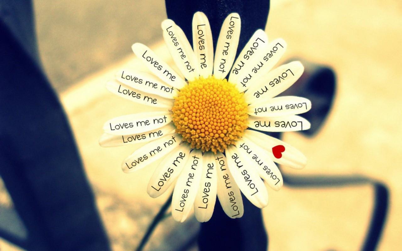 красноармеец Долго погадать на любит не любит цвете объеме