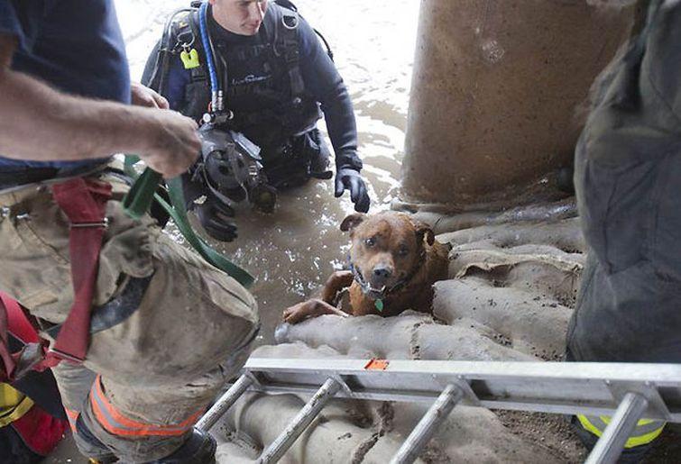 Человеческое сострадание может спасти жизнь