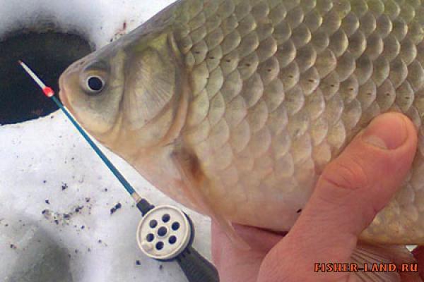 Волокуши зимняя рыбалка