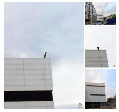 В Новосибирске несколько дней на крыше офисного здания заперта собака