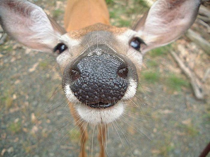 Чудо-фотографии животных