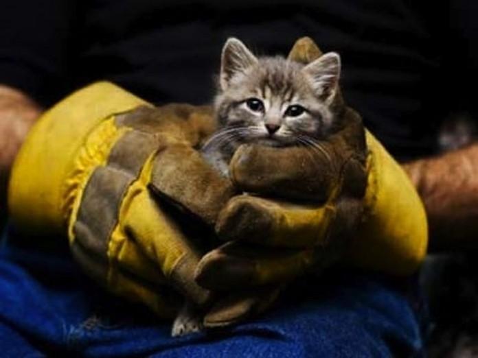 Чем для людей может обернуться спасение кота… Давно так не смеялся!