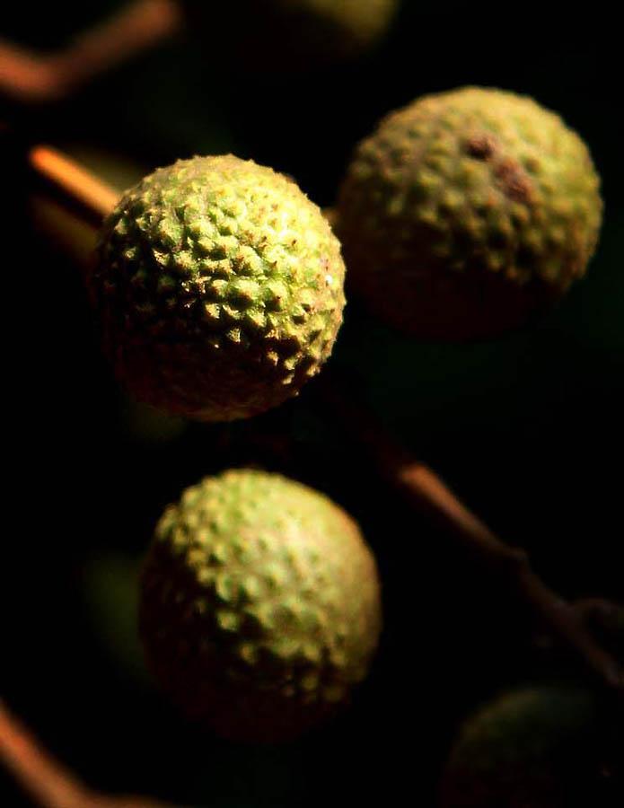 832 Экзотические фрукты