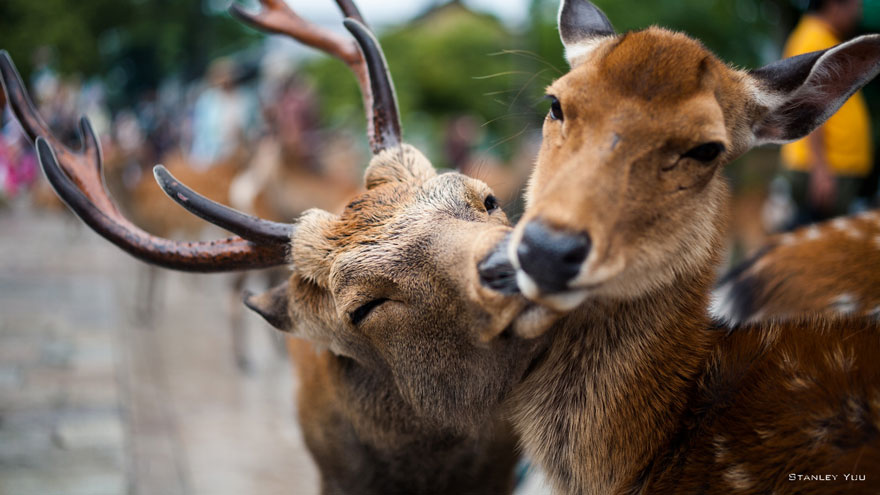 animal-couples-deer__880