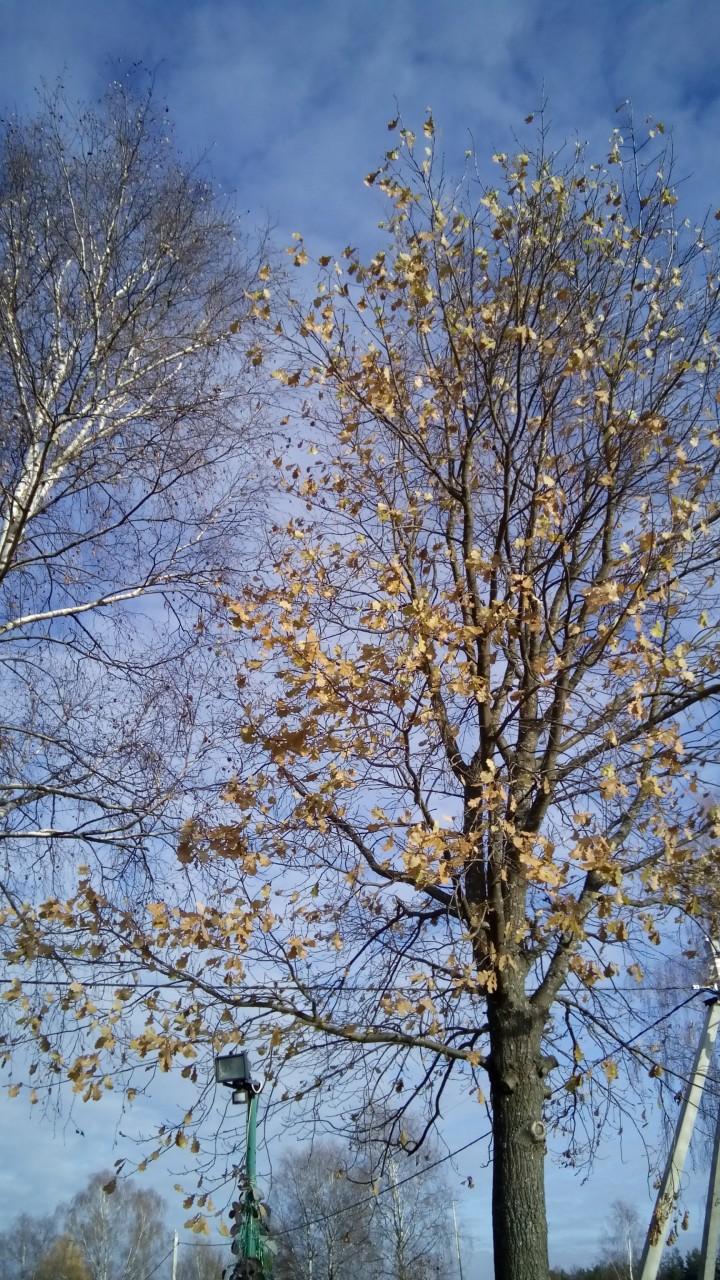 Защита растений на зиму