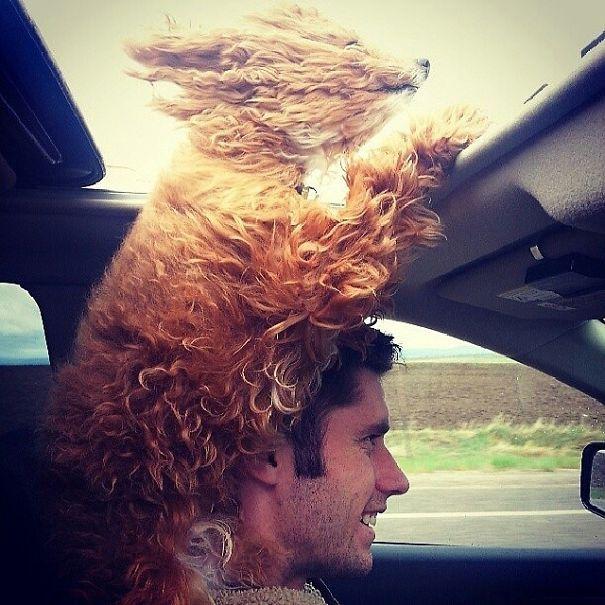 Они больше всего на свете обожают высовывать голову в окно автомобиля