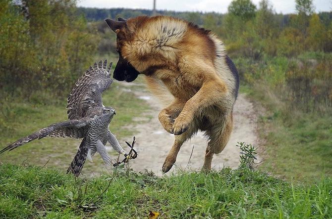 Интересные фото с животными
