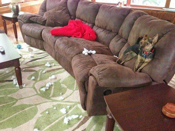 15 собак пойманы с поличным