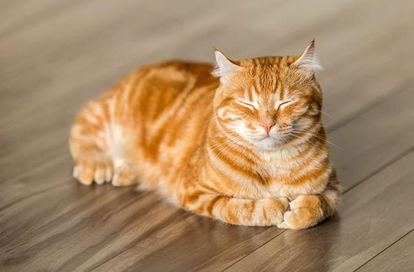 Ученые установили связь между характером хозяина и поведением кошки
