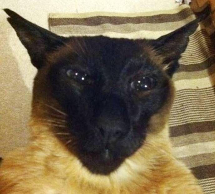 В Новой Зеландии кот десять лет жил на две семьи две семьи, кот