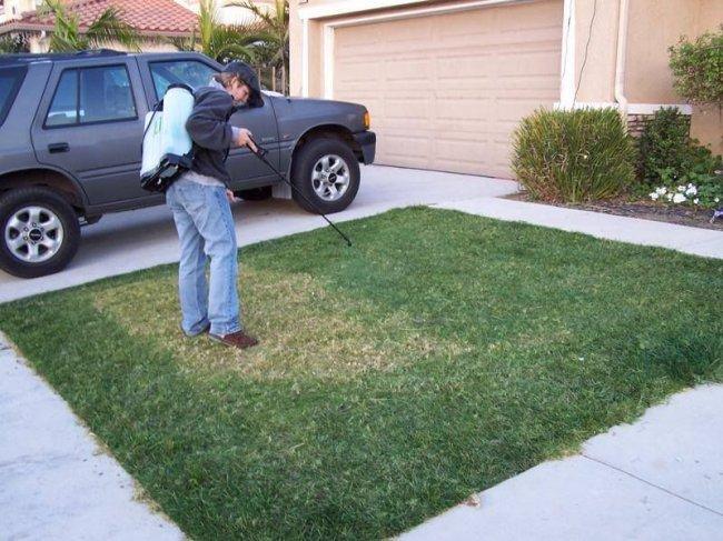 Как озеленяют газон в США