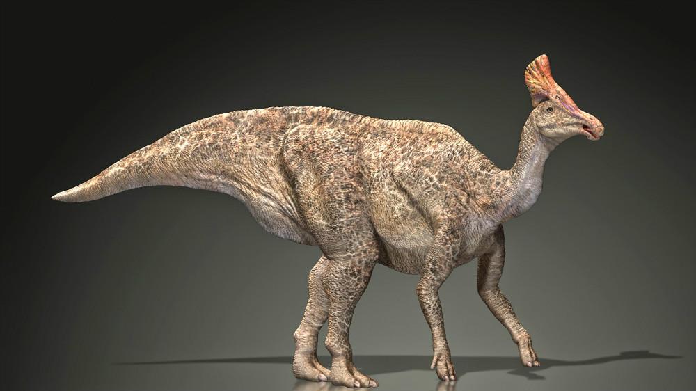 1. Олоротитан Архаринский (Амурская область). динозавры, доисторические животные, животные, история