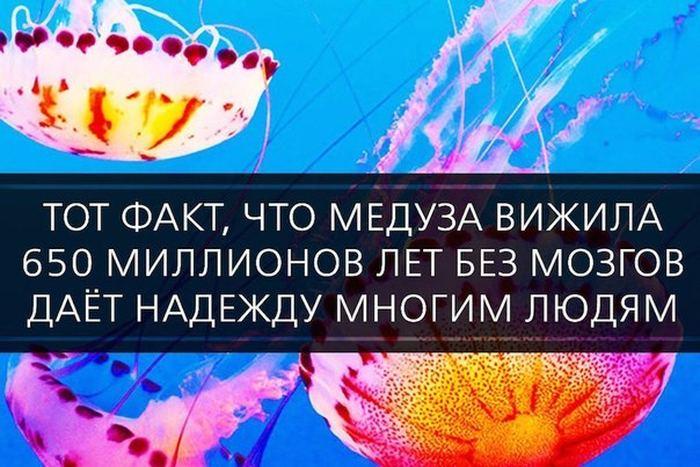 http://mtdata.ru/u24/photo0920/20223063178-0/original.jpg#20223063178