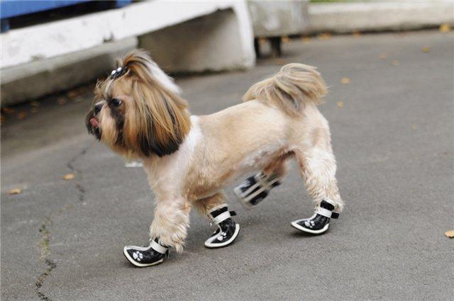 Собаки впервые в жизни надевают ботиночки - смешное видео