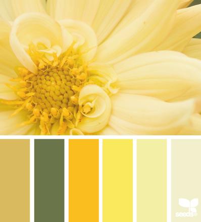 желтые флоры