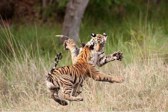 Как животные борются за жизнь