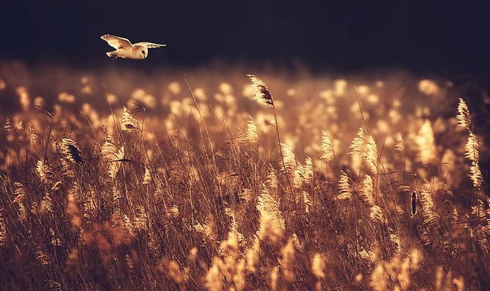 Прекрасные совушки