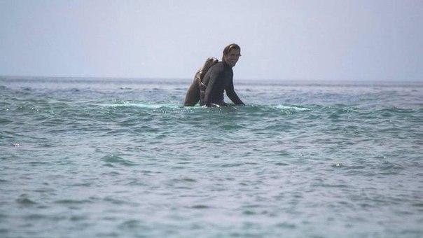 Этот серфер просто ловил волну. Но когда он вынырнул, рядом с ним оказался неожиданный друг