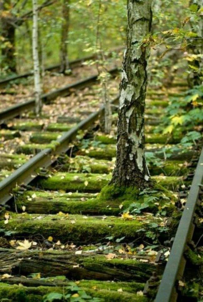 Заброшенные железнодорожные пути, Берлин заброшенное, природа, разрушение, цивилизация