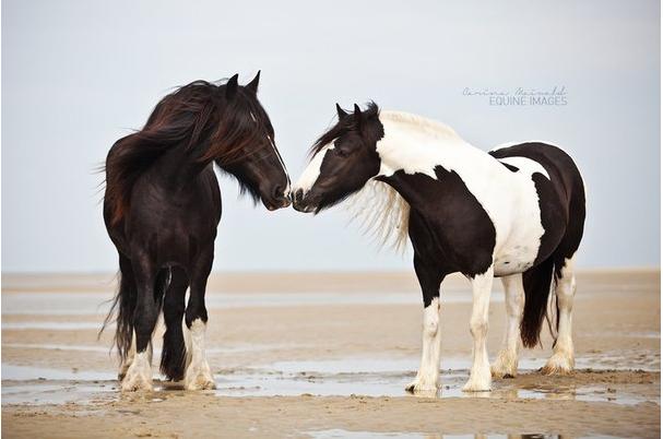 Животные Факты Фото Картинки