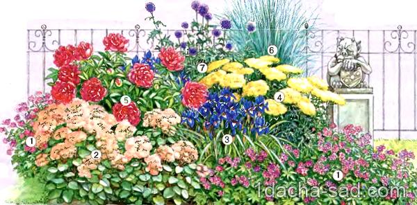схема клумбы непрерывного цветения
