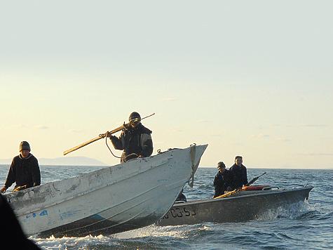 Лоринцы считаются удачливыми идобычливыми охотниками, поэтому вся неиспользованная всоседних поселениях квота на добычу китов кконцу сезона передается им.