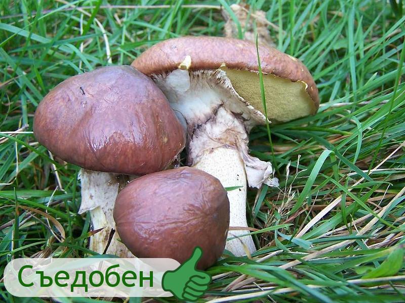 Как не спутать съедобные грибы с ядовитыми?