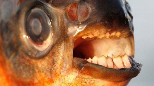 Топ-10: Ужасающие существа реки Амазонка