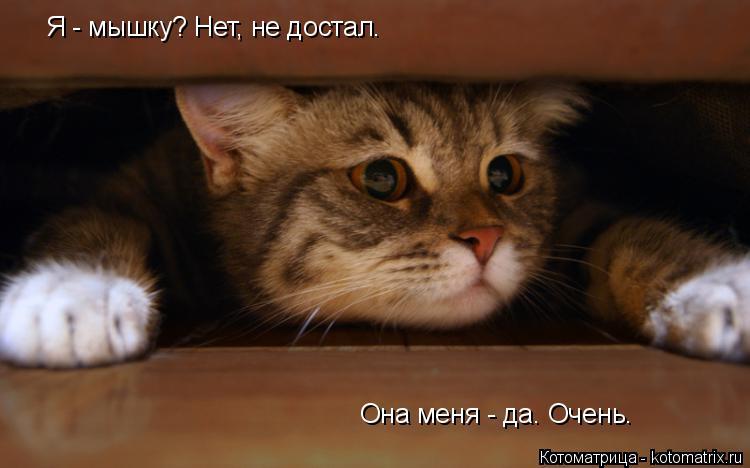 Котоматрица: Она меня - да. Очень. Я - мышку? Нет, не достал.