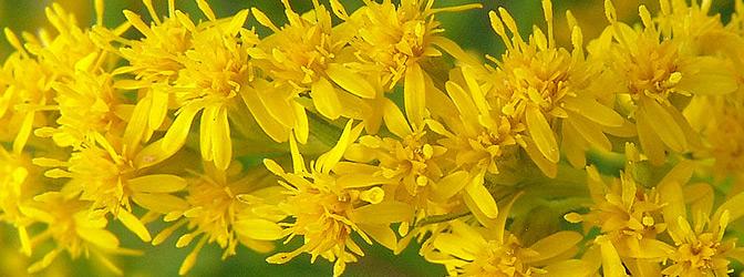 Export Unie Flora - цветы из Голландии, продажа, доставка цветов