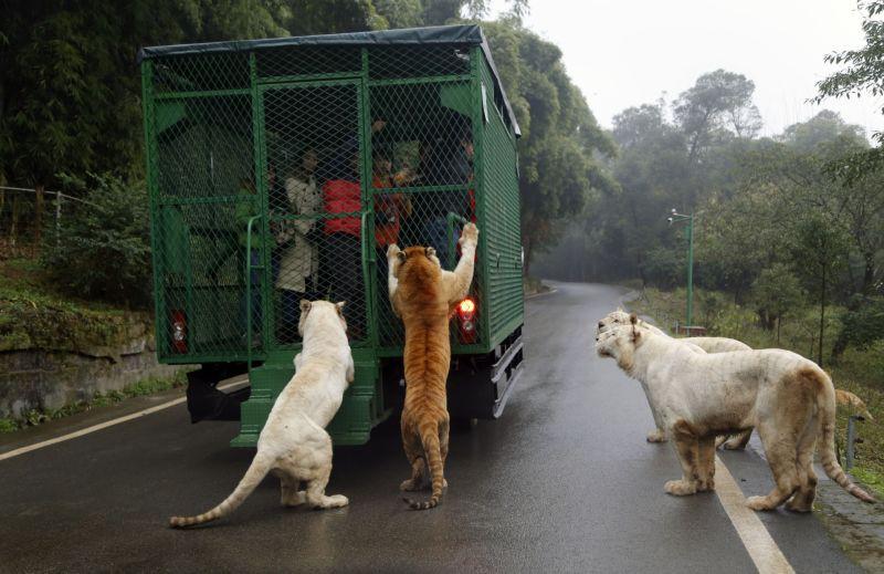 На прогулке среди хищников
