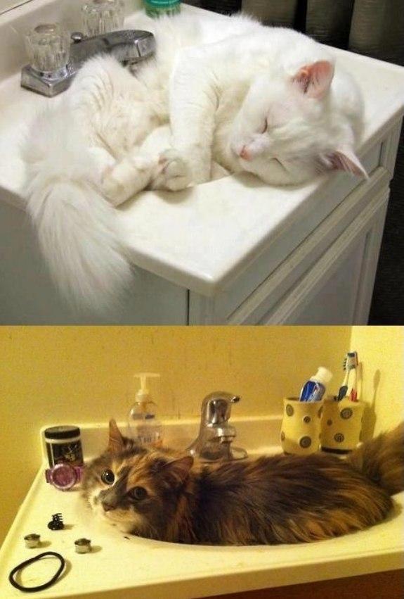 Самое удобное место кот, коты, раковина, удобное место.