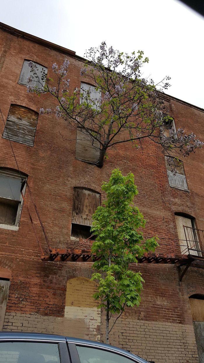 Дерево на третьем этаже дерево, живучесть, жизнь, мир, планета, растительность, фото