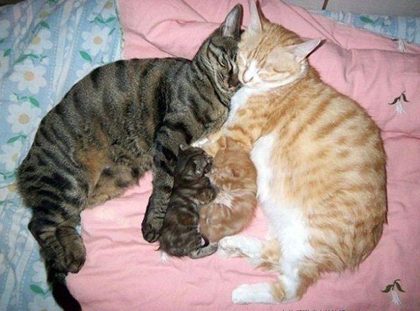 Идеальные кошачьи семейства!