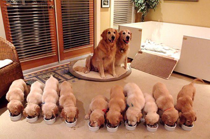 3. Гордые родители животные, потомство, собаки