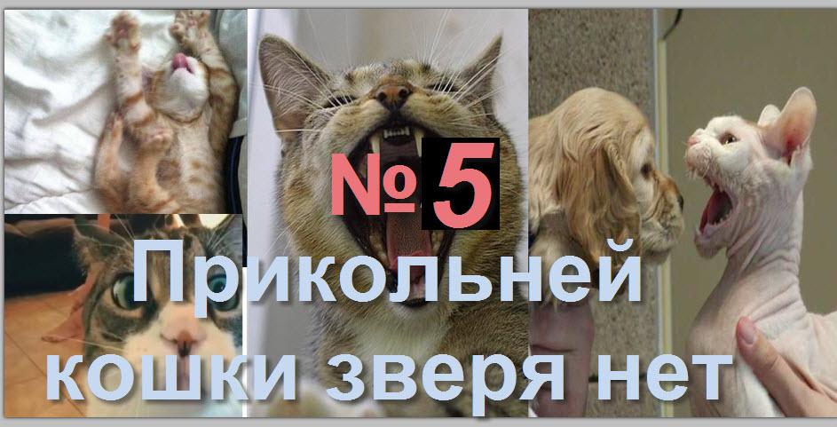 Прикольней кошки зверя нет 5 15