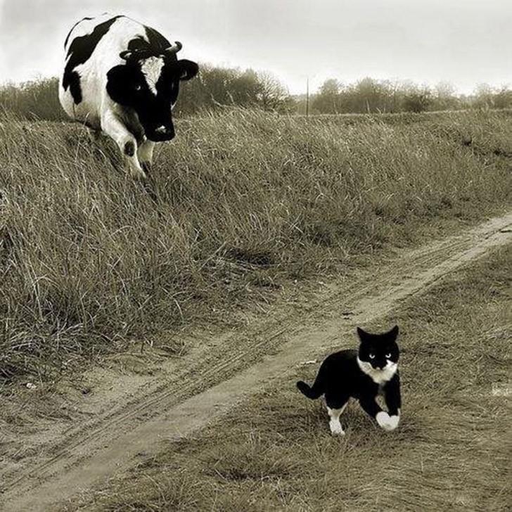 lolcats28 100 лучших фотографий кошек всех времен и народов