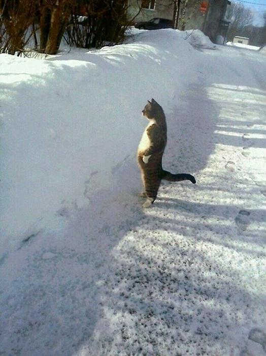 Каждый наслаждается зимой в меру своих сил и способностей.