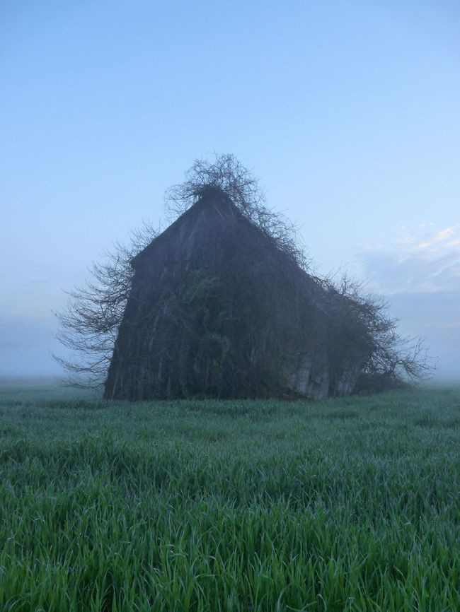 Дом похожий на дерево заброшенное, природа, разрушение, цивилизация